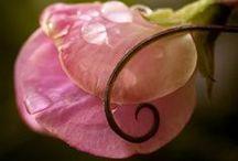 Fab Flowers 2 / by Belinda Roussel