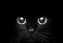 closeup cat face