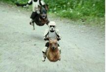 Star Wars / dun dun dun dundundun dundundun Vader, Leia, Luke, MARA JADE!