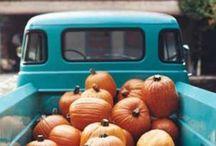 SEASON: fall / by Haleigh Byers