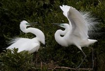 Wildlife & Nature / Glacier Country West Coast Wildife - birds, insects, flora and fauna