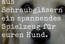 Hunde | Beschäftigung / Nie wieder Langeweile dank dieser ungewöhnlichen Tipps und Tricks für eine artgerechte Beschäftigung des Hundes.