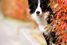 Hunde | Fotogene Vierbeiner / Supersüße und tolle Fotos von unseren liebsten Vierbeinern.