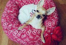 Accessoires Hello Kitty pour chiens / Découvrez la collection d'accessoires officielle par Sanrio pour Chihuahuas et petits chiens sur Tiny Dog Shop