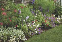 My Garden / by Sarah Bruce-Damore
