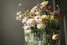 Flowers / by Kristin Messer