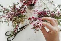 Inspiration // schöne Blumen / Blumen, Stillleben, Schönes! Flowers, stills and nice things!