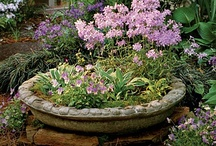 Container Garden / Beautiful containers.