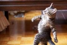 cat walk / call me crazy / by Erika Kane