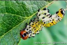 Fotos macro - Fotografías de insectos / Fotos macro de insectos, ese fabuloso mundo animal de lo diminuto. Fotografías de bichos del jardín o en su estado natural. Fotografías hechas por Landa