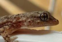 Fotos macro - Fotografías de animales / Fotografías macro de animales, insectos, reptiles, mostrando más de lo que se ve a simple vista. Fotos macro hechas por Landa - Antonio Manuel Landa López.