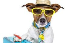 Pet Freindly Cabins / All of these cabins are #petfriendly for #dogs