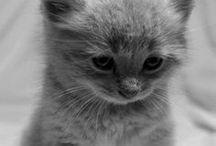 Cats / I love animals, but I adore cats!