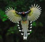 #Birds.