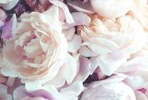 Les Fleurs / Beautiful Bouquets and Pretty Flowers