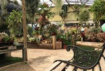 Marvellous Orchid Lynnwood / Retail Orchid and Exotic plants outlet