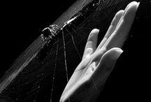 re; eyes that drive wolves mad ( CLAUDE/ALOIS ) / claude faustus x alois trancy » black butler II