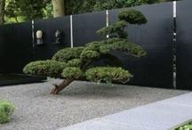 Yard Design / by Holland Seydel | HAUTE NATURE
