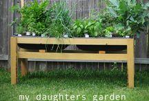 gardens / by Meagan Foster