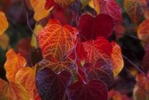 Autunno / by Cathy Cariati Evans