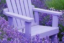 Purple - Lilac - Lavender