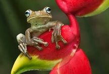 Frogs / I love the little froggy faces!