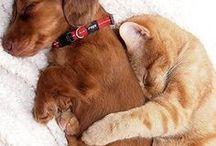 Dogs & Cat