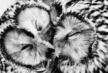 Owls! / by Anna Harrison