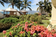 Vallarta / by Bel Air Collection Resorts & Spas