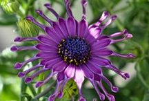 Plant ID: Nature & Gardening ☼ / Identifying plant life and wild life . / by Connie ...