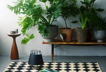 Potted / plants