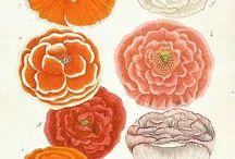 Pink and Orange / Sherbert shades, watermelon, tangerine, juicy, coral