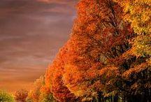Fall - Autumn - Ősz / Autumn mood - őszi hangulat