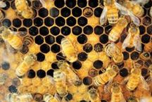 Bees, Hives, and Honeycomb / I think I love everything about bees.