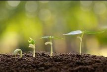 Gardening Tips & Backyard Inspiration / by MSN Lifestyle
