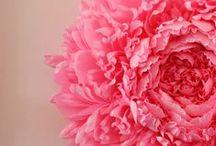 flowers / by Victoria Ordeman