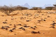Sudan / by MAG (Mines Advisory Group)