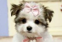 so darn cute / by Amanda Barber