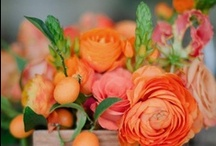 Orange/Coral Flowers / Coral and orange floral inspiration for weddings, events & decor.  / by The Bride's Cafe