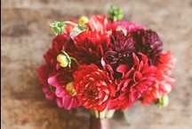 Red Flowers / Red floral inspiration for weddings, events & decor.  / by The Bride's Cafe
