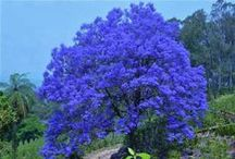 Árvores maravilhosas wonderful Tree / árvores de todo o mundo.