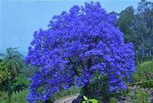 Arvores maravilhosas wonderful Tree / árvores de todo o mundo.
