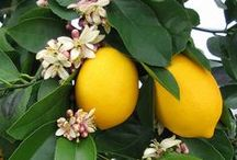 Pomar de delicias /Orchard of Delights / Frutas, legumes, vegetais,ervas, pimentas,etc.