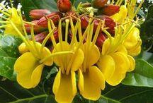 Flôres Raras e Lindas***Rare and beautiful flowers / plantas incomuns e lindas.