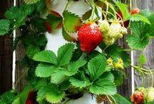 Minha Horta***My garden / FRUTAS E  LEGUMES
