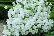 Flôres brancas***White flowers