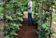 Gardening / A board on gardening, growing your own food and urban farming