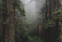 aesthetic of forest