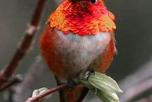Hummingbirds - The Tiny Excellence / Hummingbirds in wild nature