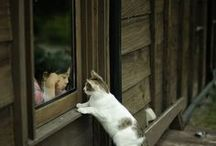 Cats / by Amanda Zito Tsingtao